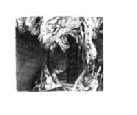 164_grotte2mini.jpg